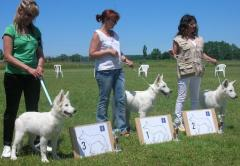 2011 Fubine Puppy Winner