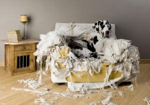 2014 01 Dogge-Sofa